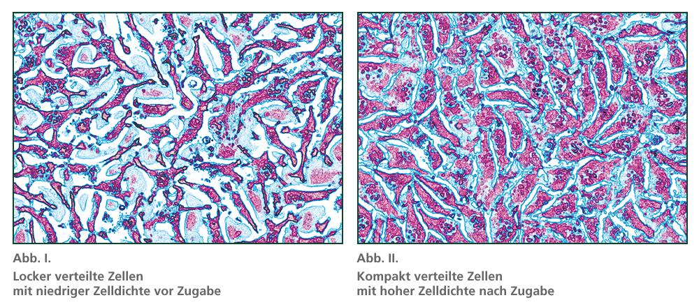 Zellkulturen ohne und mit Kieselsäure-Gel