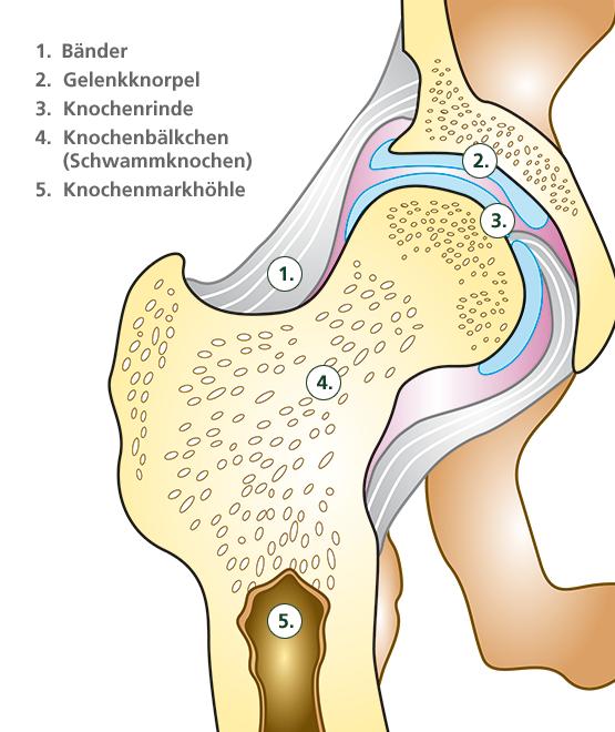 Knochenaufbau